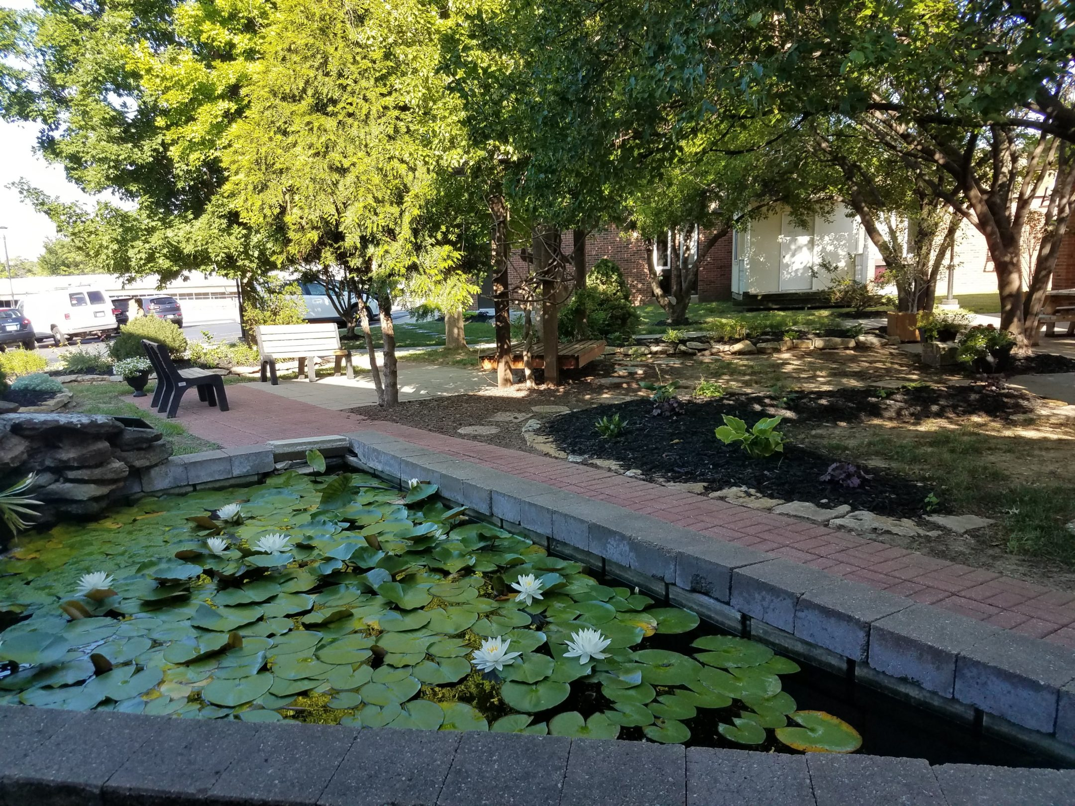 A triangular water pond created using red brick. The water is covered with green lily pads and a few white flowers in bloom. In the backgroudn trees giving shade to the grass, plants, benches and sidewalks.