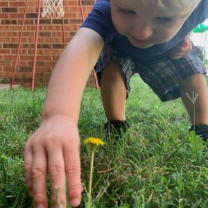 Child Reaching To Pick Up A Dandelion